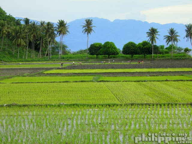 Climate-Resilient Rice