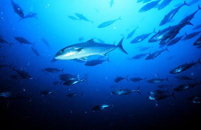 Amberjack fishing charter in tampa