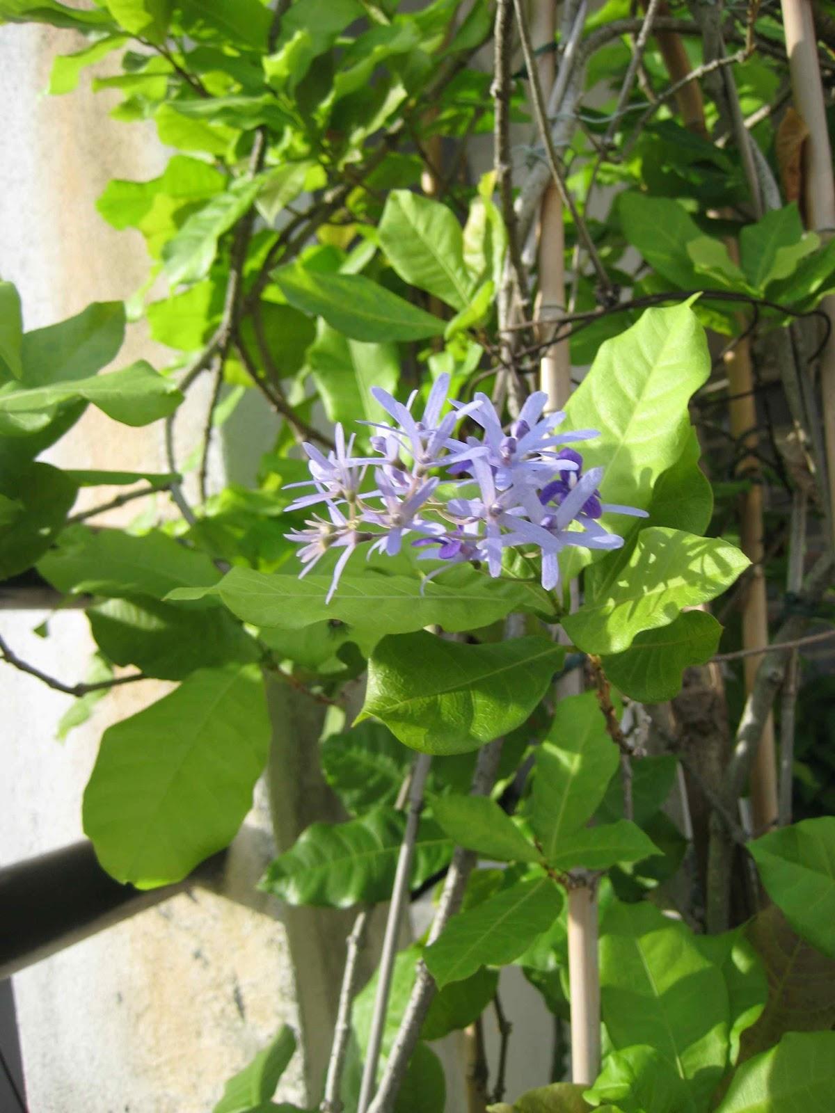 Stephs Green Space My Green Stories My Garden Finally Finally