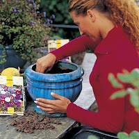 Planting container with spring-flowering bulbs