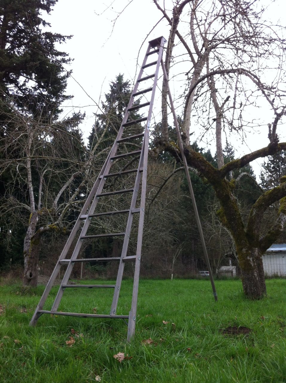 The Reluctant Homesteaders Pruning