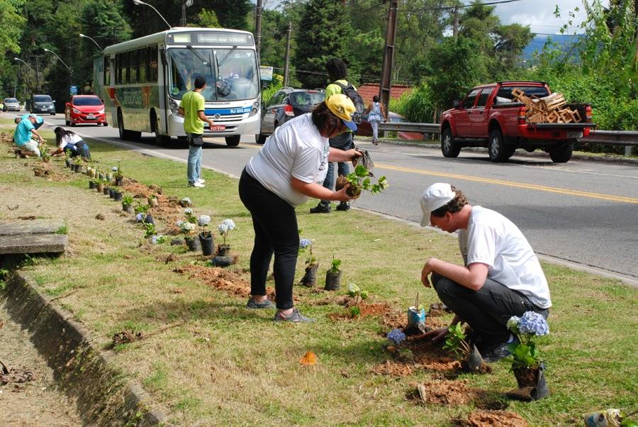Avenida Rotariana, no Soberbo, recebe plantio de hortênsias