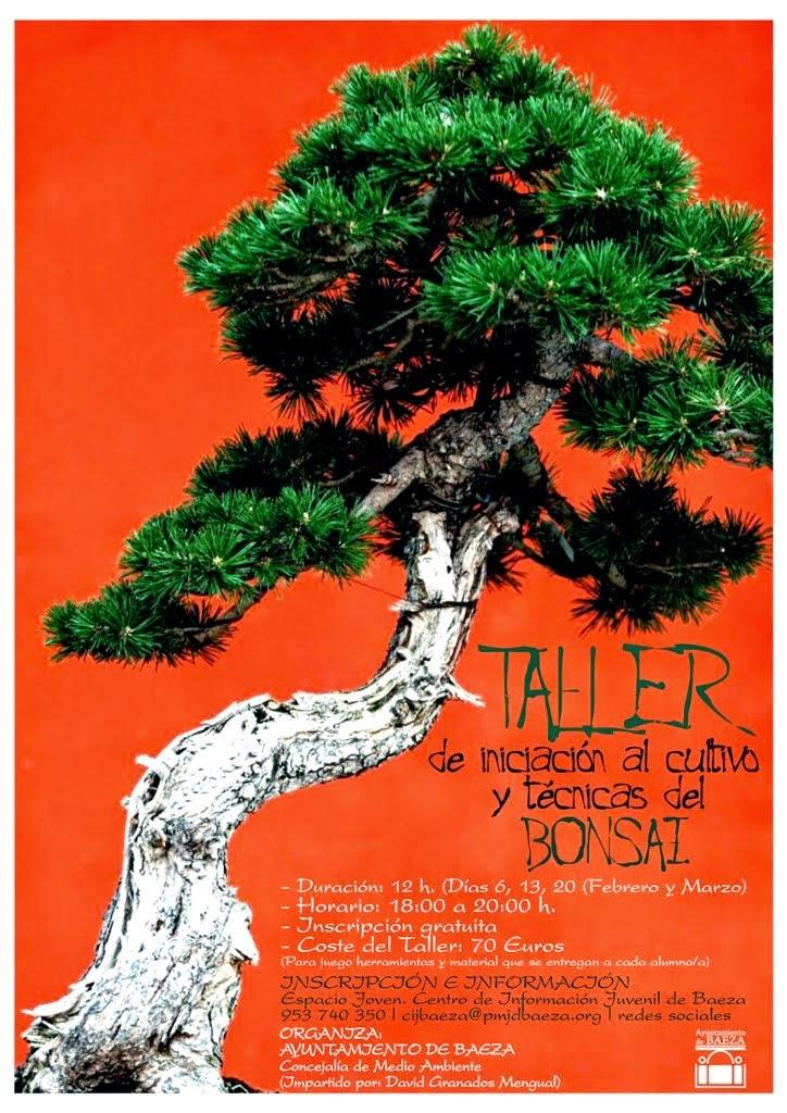 Taller de iniciaci n al cultivo y t cnicas del bonsai informaci n juvenil baeza - Cultivo del bonsai ...