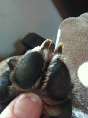 how to cut dark nails on dogs