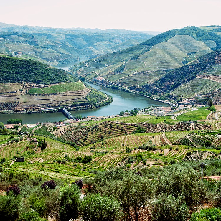Douro Valley, Porto Portugal