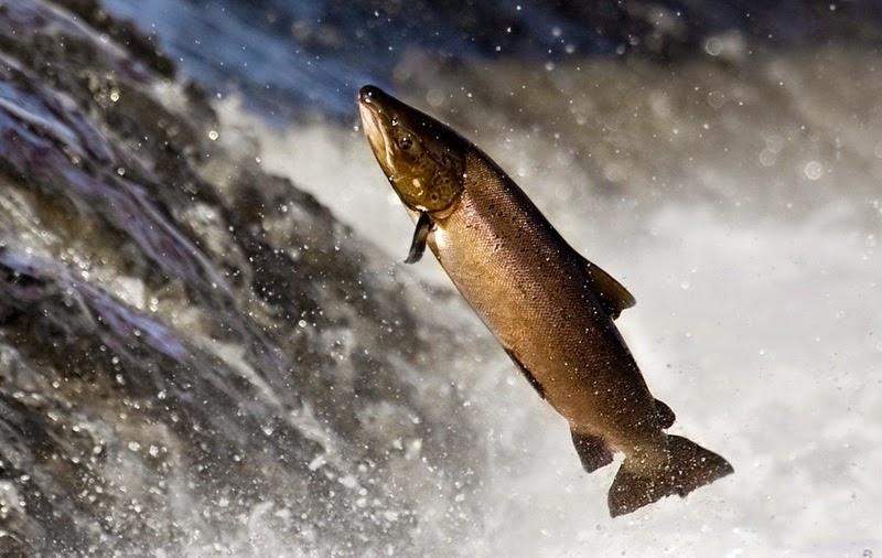 sustainable fishin