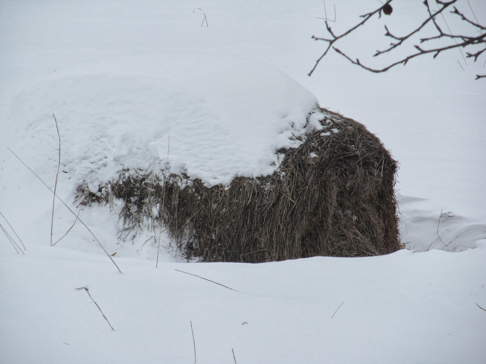 hay bale in winter