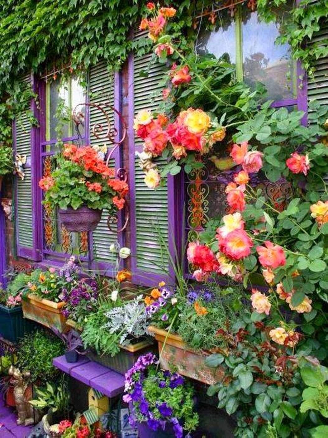 Jardinería, Cuidados de las Plantas