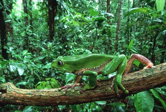 Top 10 interesting facts about rainforest