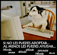 SI NO LES PUEDES ADOPTAR