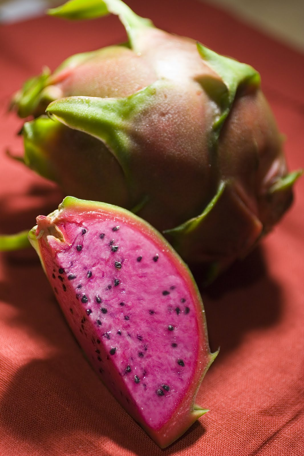 dragon fruit business