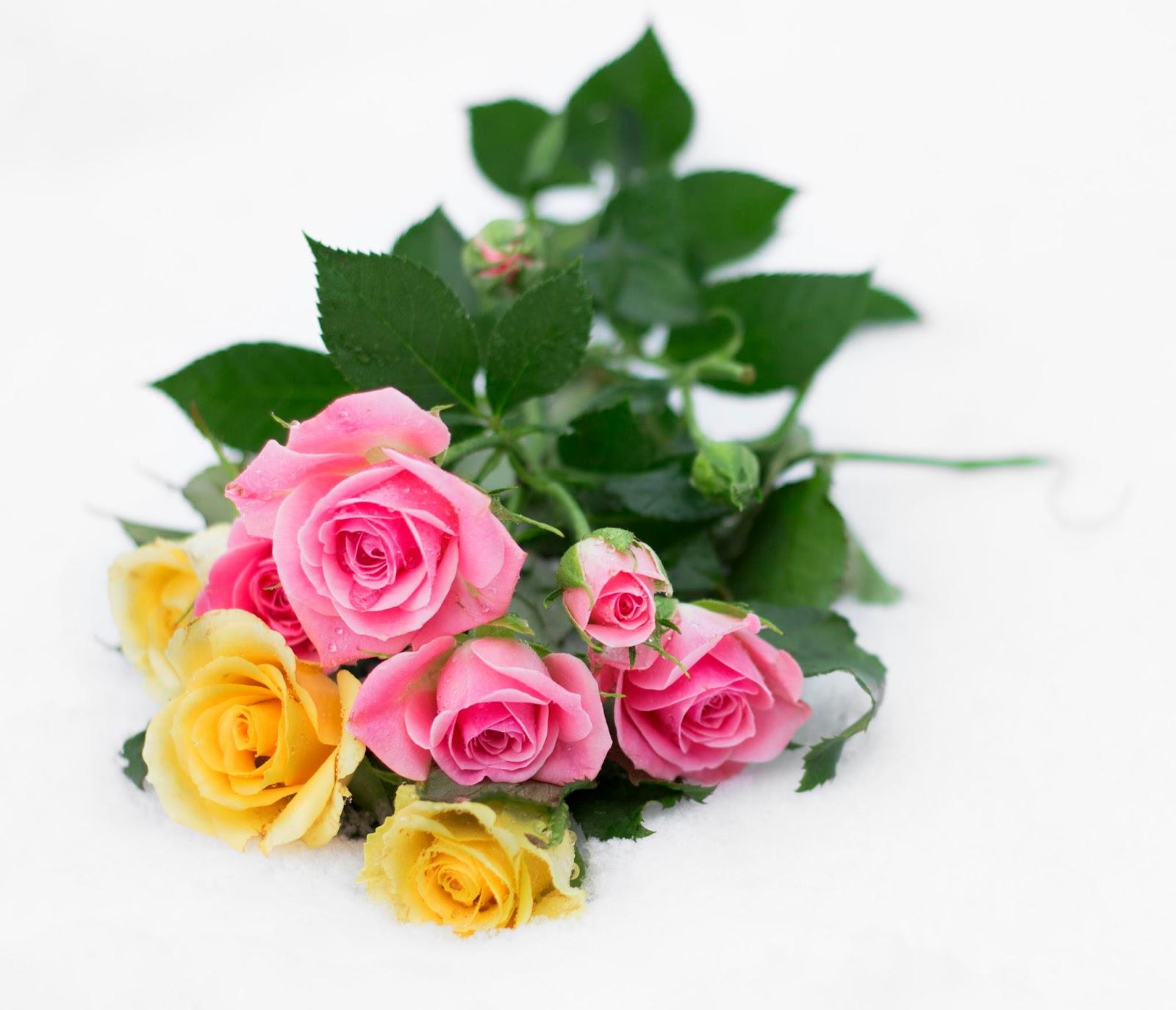 Фото роз на открытку