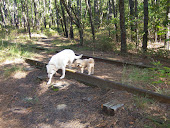 My dog Blizzard and his buddy Oscar on the railroad track in Wharton.