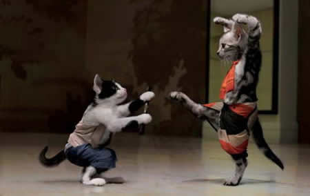 love cat ripping panels funny kung fu fighting cats kung fu cats