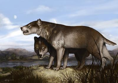 ursidae fosil Hemicyon
