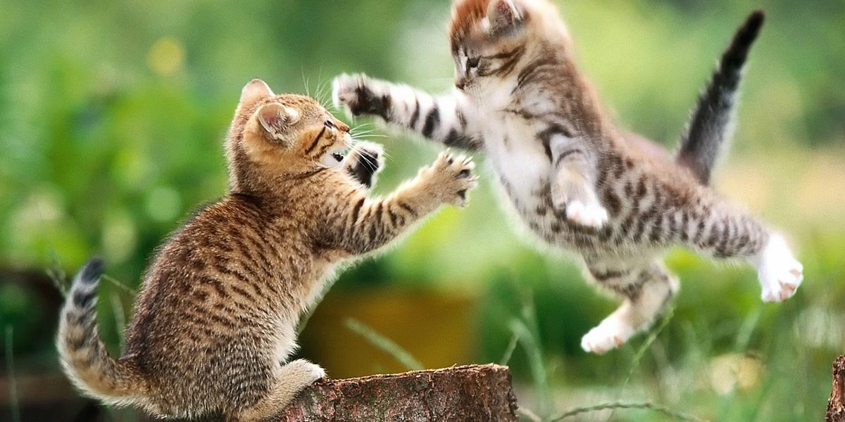 Cats Animals l 300+ Muhteşem HD Twitter Kapak Fotoğrafları