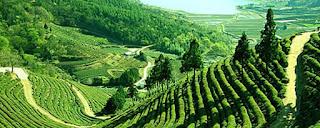 Venta de té e infusiones gourmet en la Sierra de Madrid