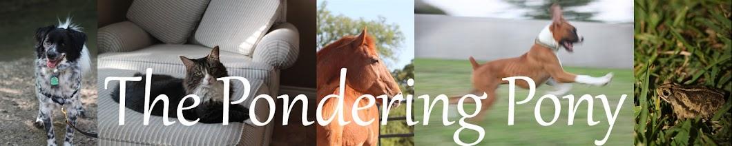 The Pondering Pony