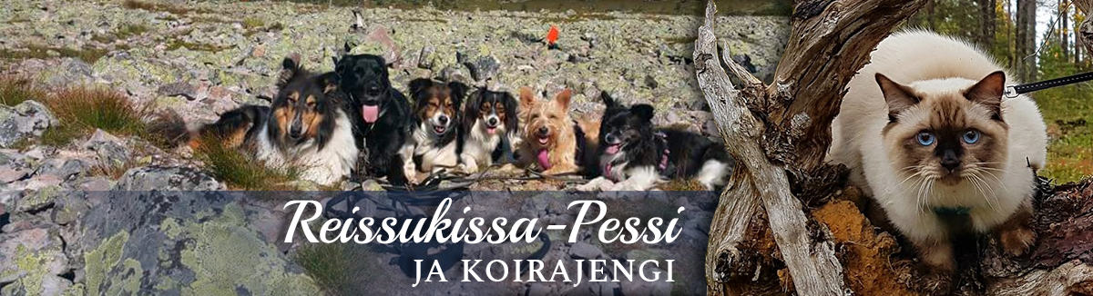 Reissukissa-Pessi ja Koirajengi