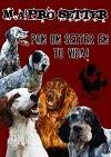 Murcia adopta! pro setter