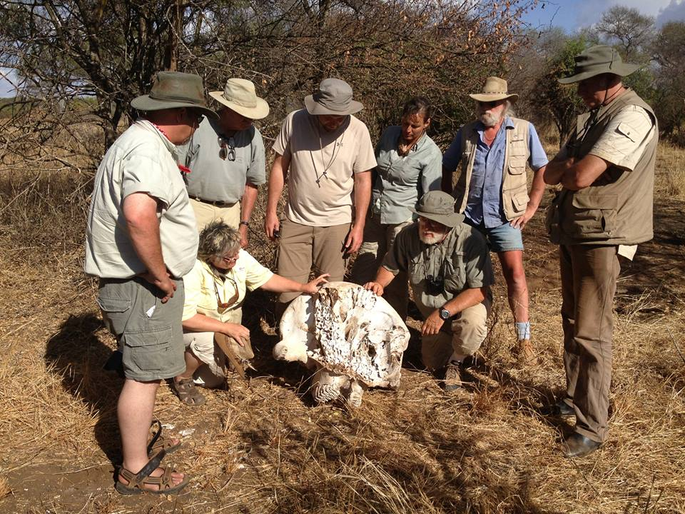With a poached elephant skull
