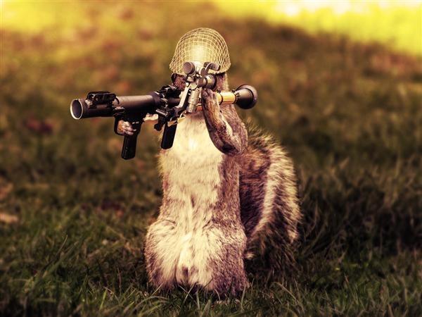 Evil Cat With Gun