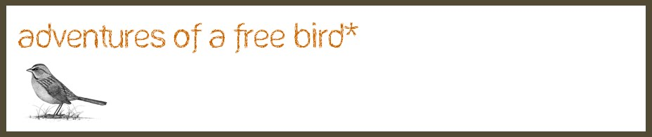 adventures of a free bird*