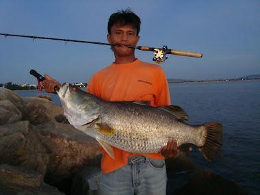 Ikan Siakap Putih