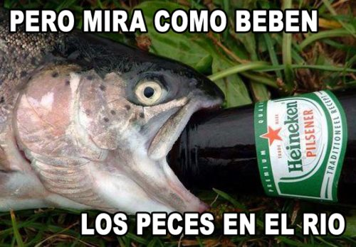 pero mira como beben los peces en el rio, los peces beben agua