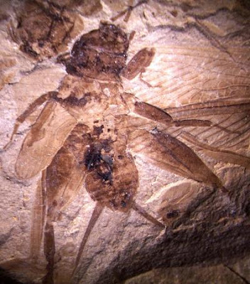 oldest fossils