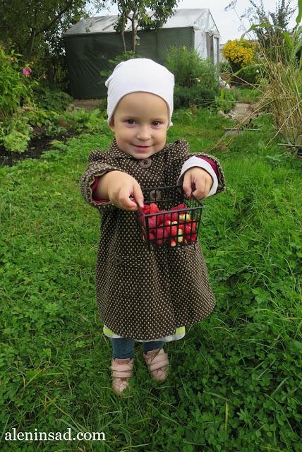 аленин сад, сентябрь, малина, земляника, ремонтантная