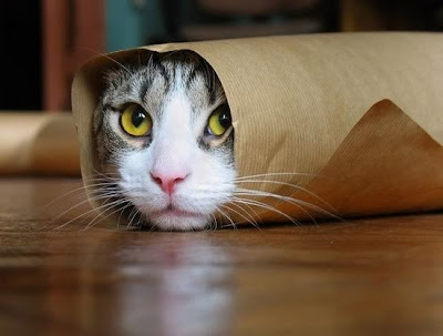 Cute cat rolled up in paper