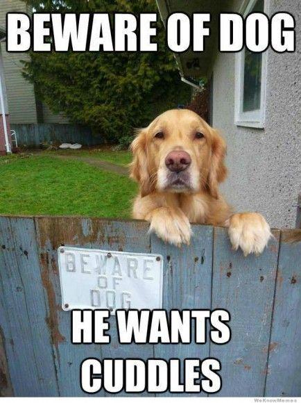 dogmeme1 dog meme collection kenzie the fuzzbucket