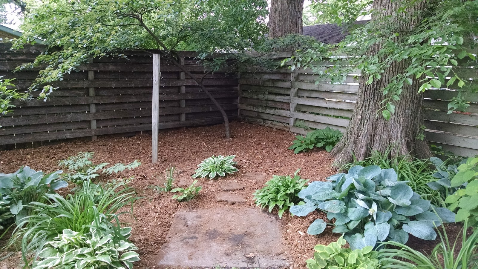 abundant design refreshing an overgrown backyard