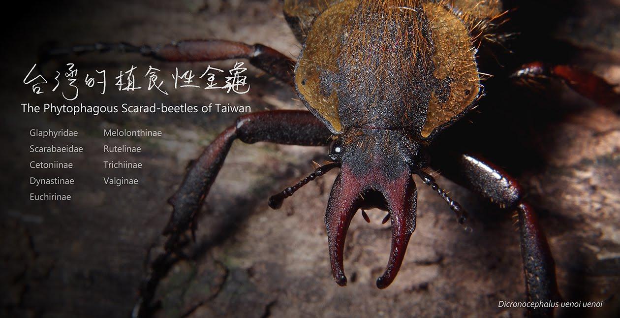 台灣的植食性金龜