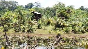 Casa no Amapari