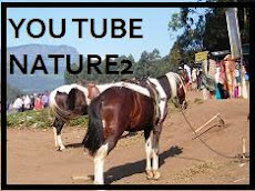 YOU TUBE VIEWS 2
