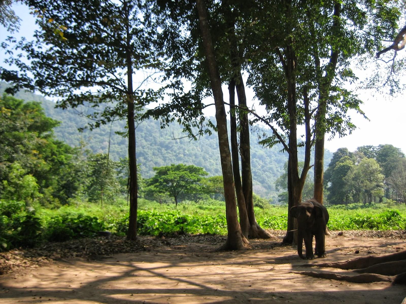thailand-elephant-jumbo-camp