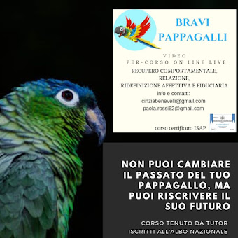 VIDEO PER-CORSO ON LINE BRAVI PAPPAGALLI