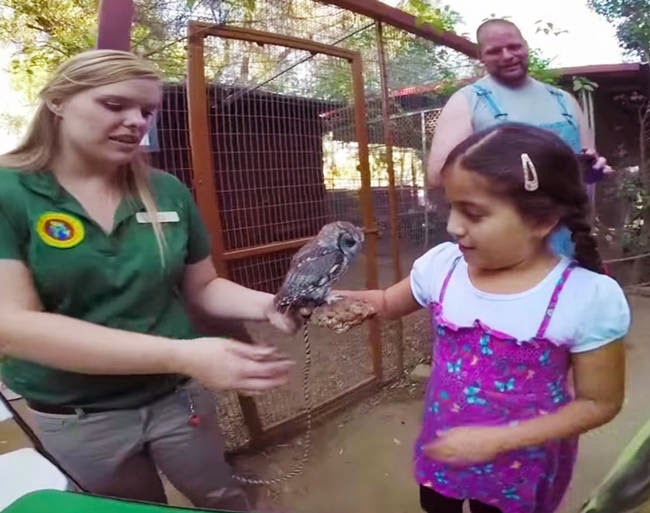 Which is good because visitors love see the little guy. - It Appears This Gorgeous Blind Owl Has Awe Inspiring Constellations In His Eyes