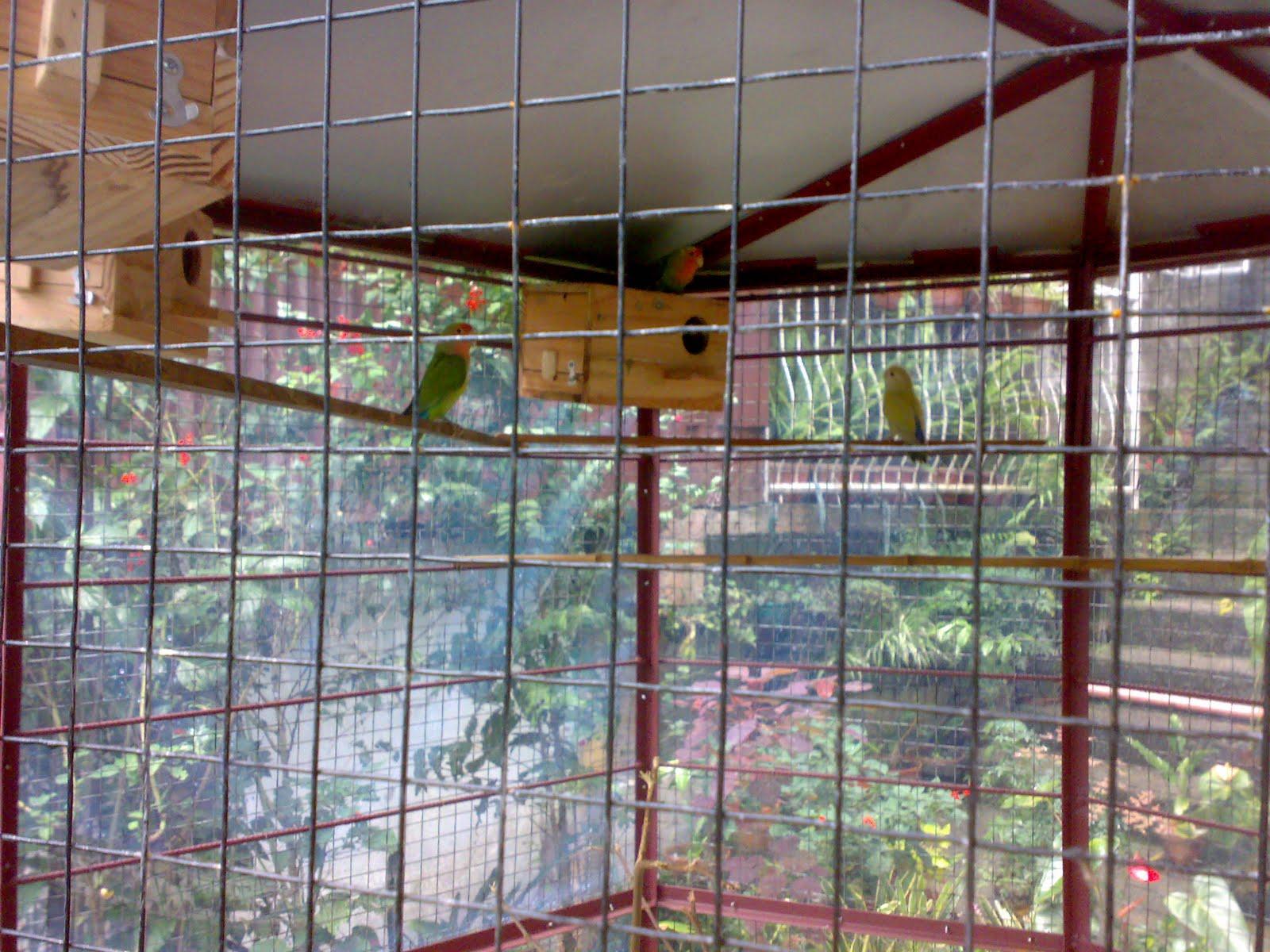 how to catch birds in aviary