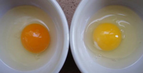 les œufs proviennent d'un poulet sain