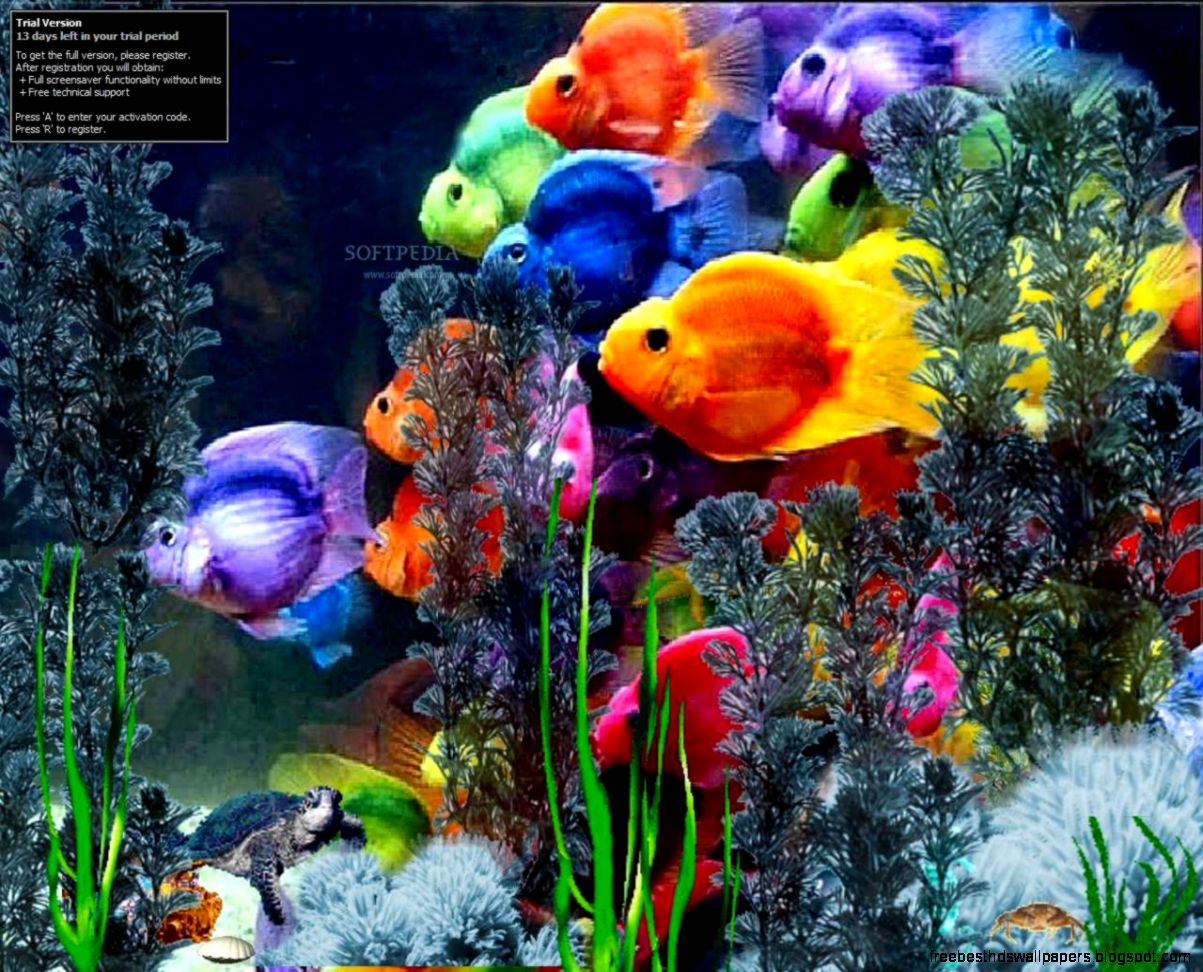 Microsoft fish screensaver wallpaper free best hd wallpapers for Moving fish screensaver