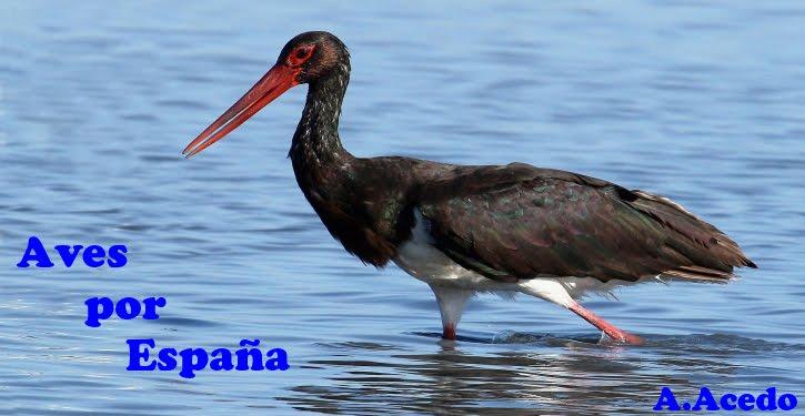 Aves por España
