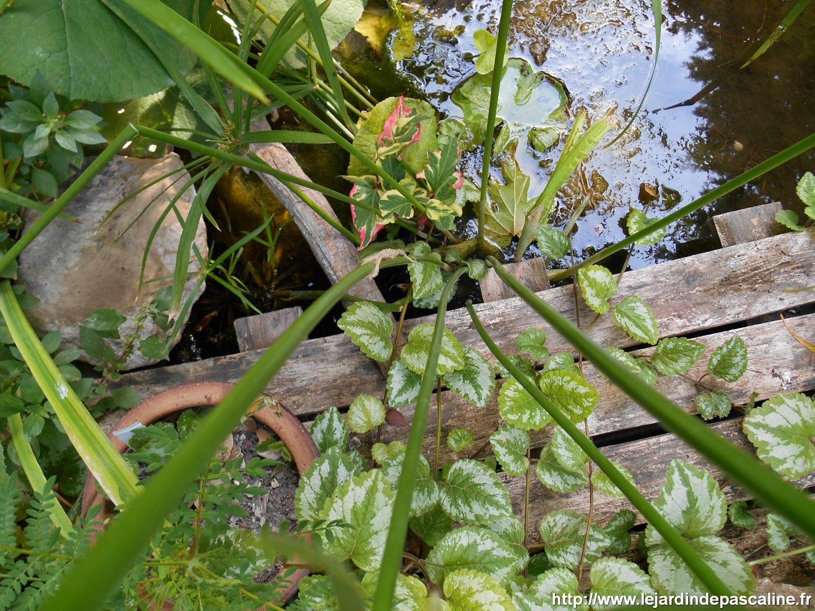 Le jardin de pascaline pensez r cup rer l 39 eau de pluie - Recuperer l eau de pluie pour le jardin ...