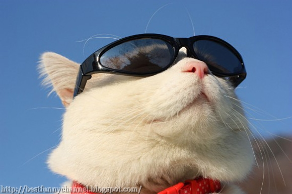 Funny cat in sunglasses.