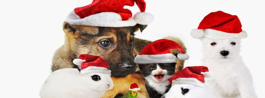 Animals In Christmas Hats Cover Photo