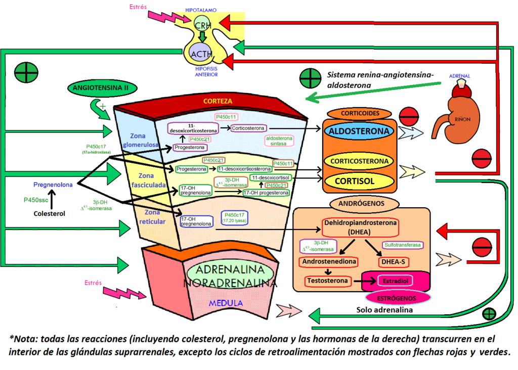 esteroides anabolicos pdf