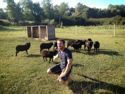 Eric Peron et ses moutons d'ouessant