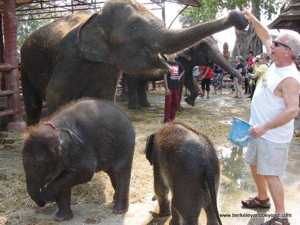 feeding elephants at ElephantStay village in Ayutthaya, Thailand